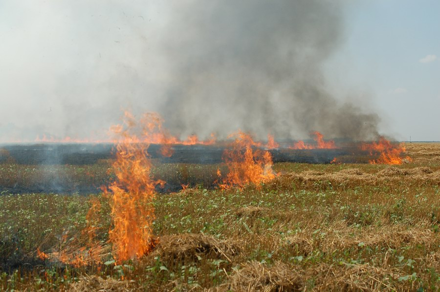incendiu-jegalia-2.jpg