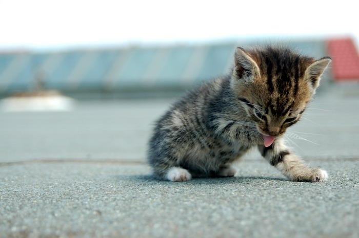 pisica-11522.jpg