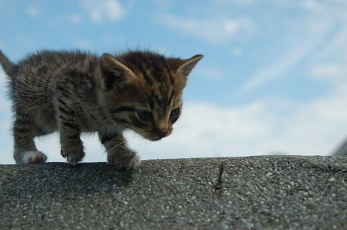 pisica-11531.jpg