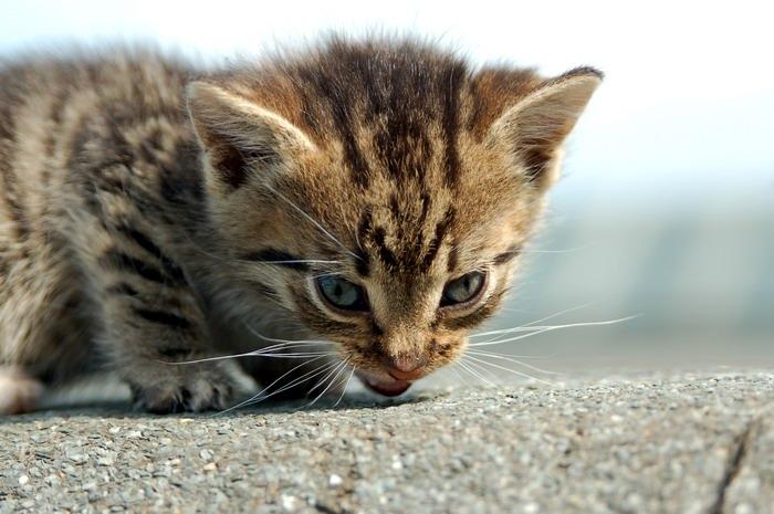 pisica-11532.jpg