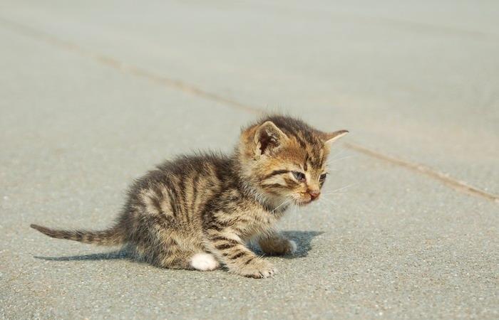 pisica-11546.jpg