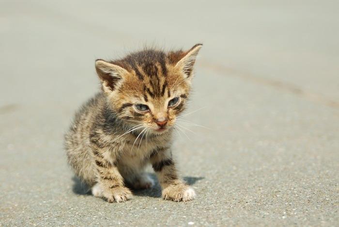pisica-11548.jpg