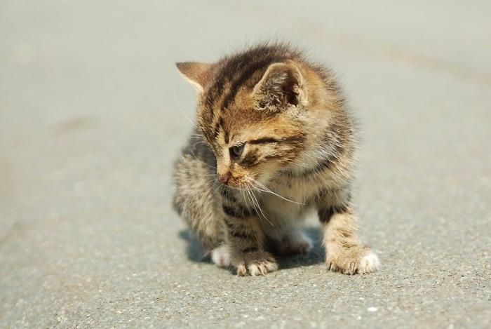 pisica-11549.jpg