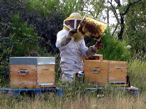 Fonduri europene pentru animale şi albine