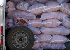 morcovi-confiscati