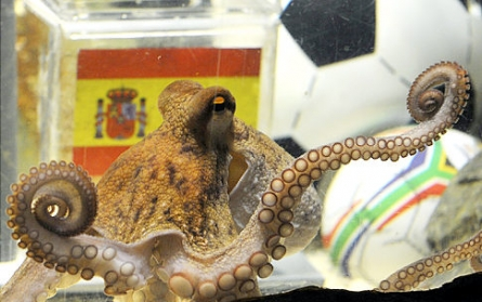 Germany Soccer WCup Octopus Oracle
