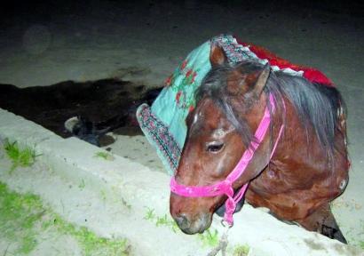 curierul-9-aprilie-cal.jpg