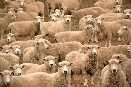turma de oi Oi capre boi