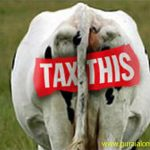 tax-this-cow