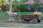 cal caruta 150x99 traian tractor caruta