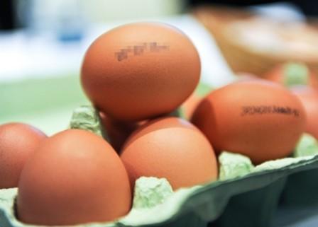 """Conferinta intitulata """"Stampila de pe ou"""", care marcheaza inceperea campaniei cu acelasi nume, initiata de organizatia pentru protectia animalelor Vier Pfoten, in Bucuresti"""