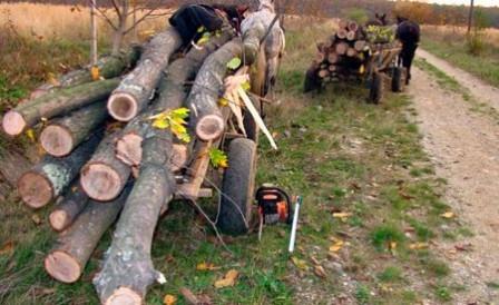 furt-lemne-caruta
