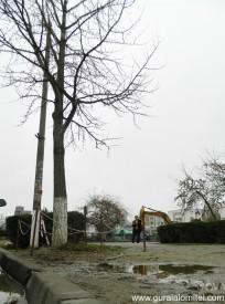 Ginkgo.Biloba.tree.1.jpg